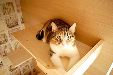 Передержка кошек Нижний Новгород