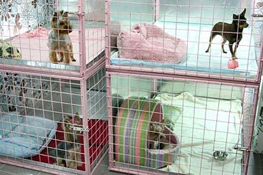 Гостиница для собак Нижний Новгород