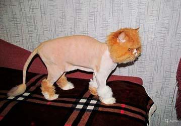 Стрижка кошек Нижний Новгород