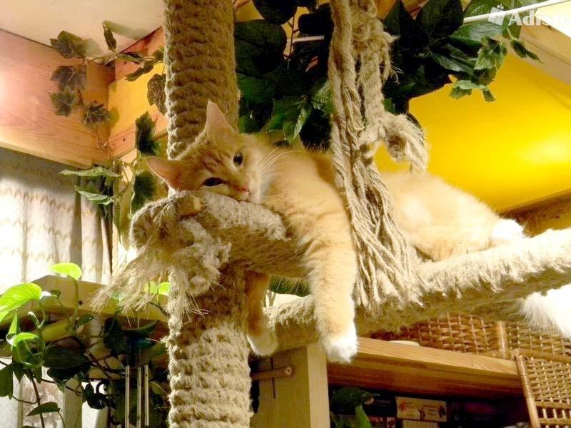 Передержка кошек в гостинице для кошек