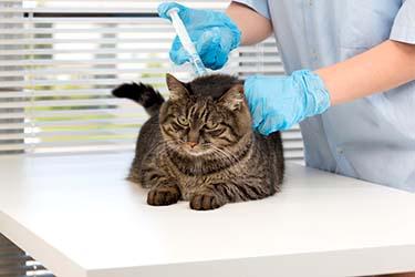 Вакцинация кошек на дому Нижний Новгород