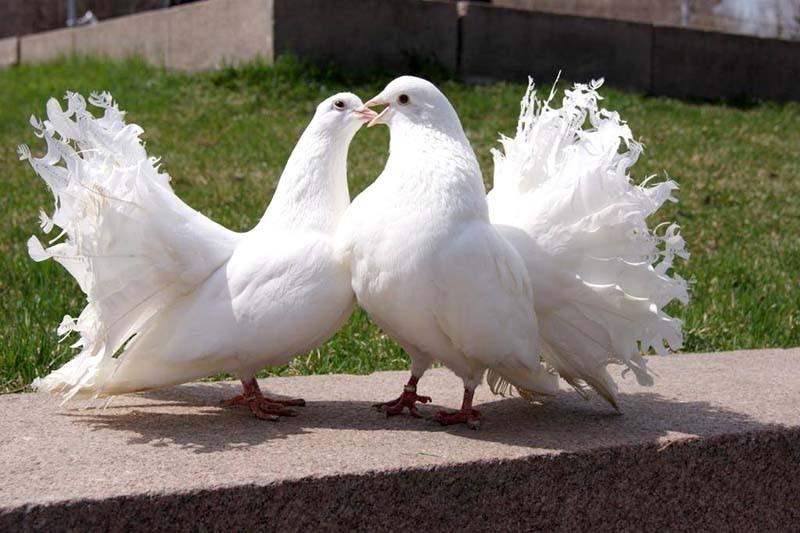 Лечение голубей - Кот Матроскин