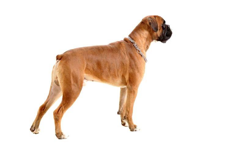 Купирование хвоста у собаки в клинике Кот Матроскин