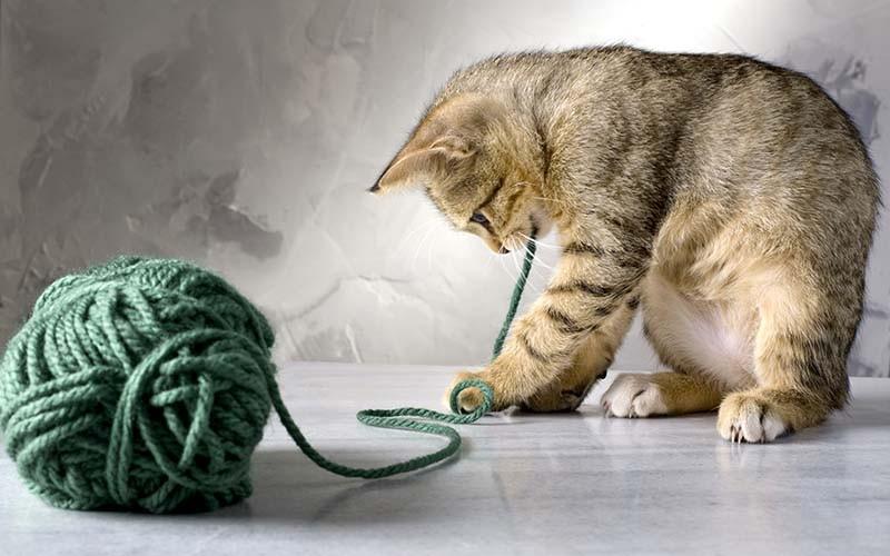 Уход за котом