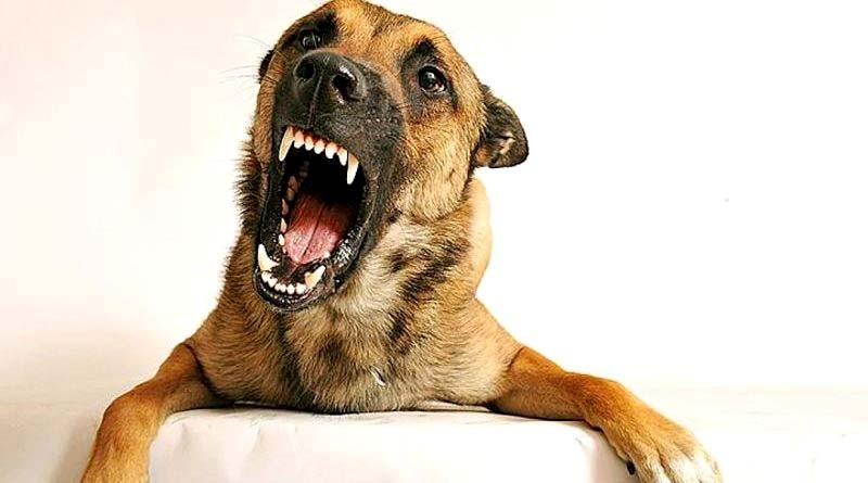 Бешенство собак